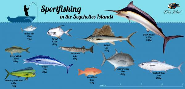 Sportfishing in the Seychelles Islands