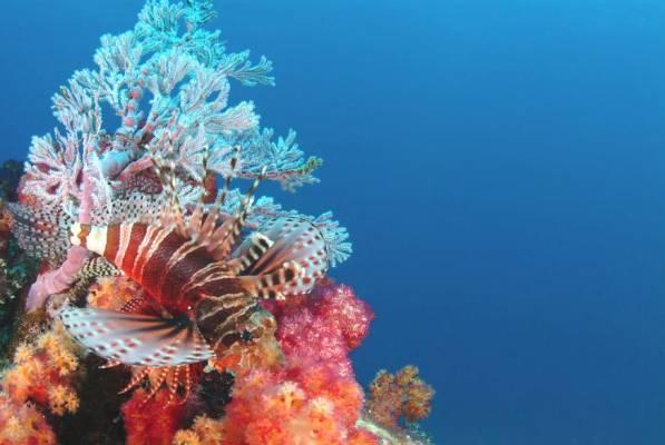 Undersea Adventures in the Seychelles