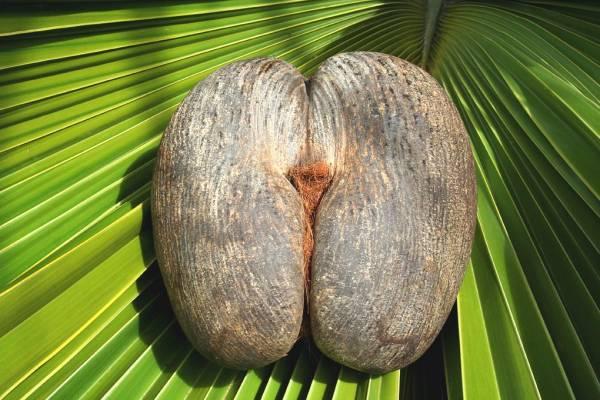 Benefits of Eden Island in Seychelles